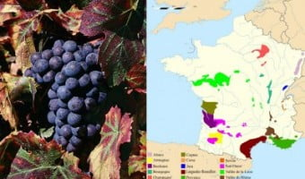 Guest Post: Muscadet and Beaujolais –  Drinking Wine the Convicted for Grape Way