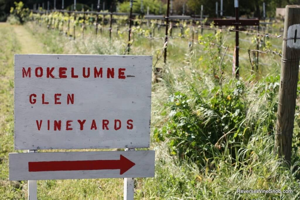 This way for one of the most interesting collection of grape varieties we've ever seen.