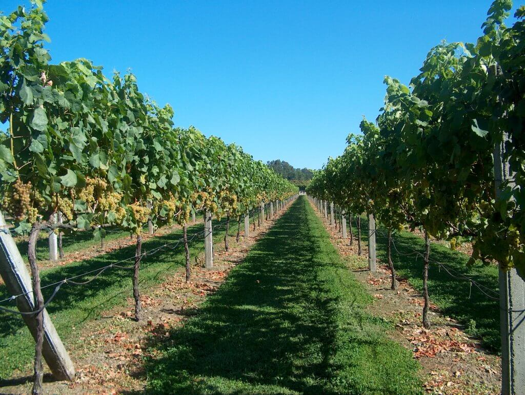 Vinho Verde - Modern Wines With A Whole Lot of History