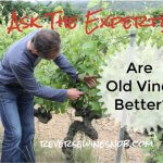 Do Old Vines Make Better Wine? Ask The Expert!