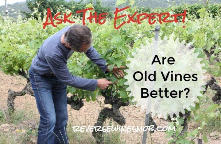 Do Old Vines Make Better Wine? Ask The Expert!