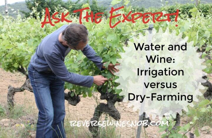 Water and Wine - Irrigation Versus Dry Farming? Ask The Expert!