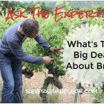What's The Big Deal About Brix? Ask The Expert!