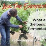 What Are The Basics Of Fermentation? Ask The Expert!