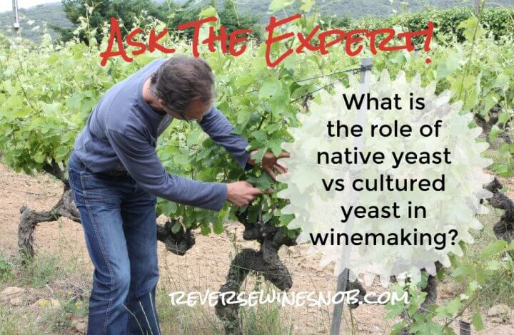 What Is The Role Of Native Yeast Versus Cultured Yeast in Winemaking? Ask The Expert!