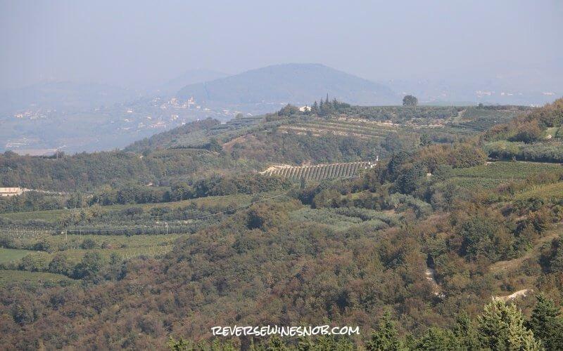 A vineyard view at Pasqua