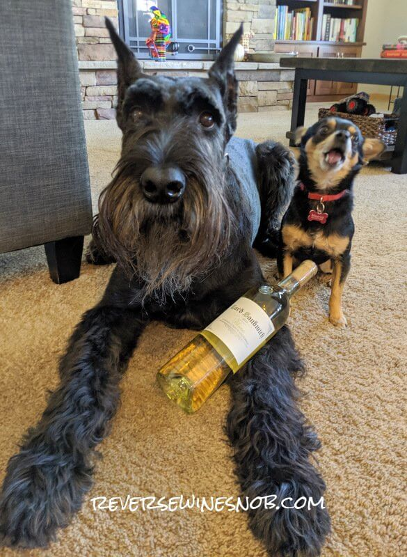 This Insider Deal is Reverse Wine Snob dog approved!